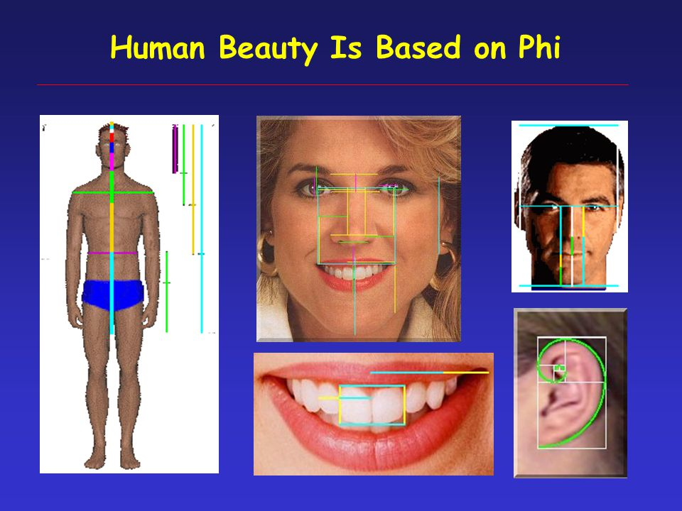 Phi = A/B = B/C = 1.618… P = B/A = C/B = 0.618… Phi: the Golden Ratio and Fibonacci Series BC A http://goldennumber.net