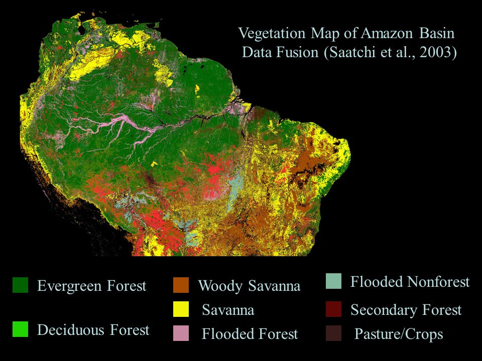 Evergreen Forest Deciduous Forest Woody Savanna Savanna Flooded Forest Flooded Nonforest Secondary Forest Pasture/Crops Vegetation Map of Amazon Basin Data Fusion (Saatchi et al., 2003)