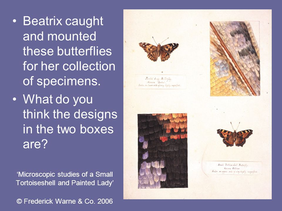 'Microscopic studies of a Small Tortoiseshell and Painted Lady' © Frederick Warne & Co.