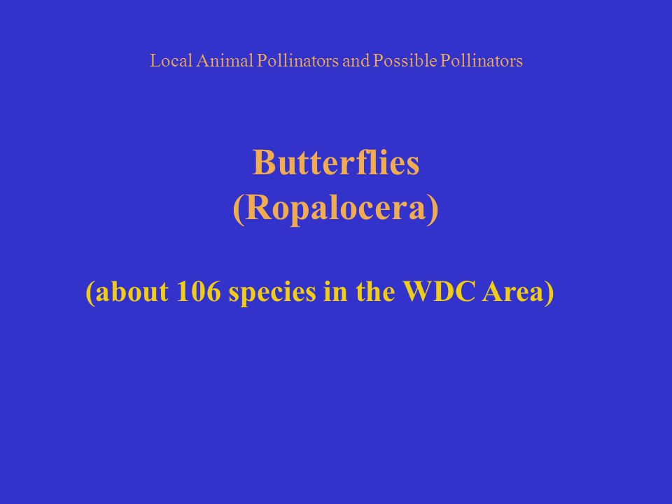 Local Animal Pollinators and Possible Pollinators Butterflies (Ropalocera) (about 106 species in the WDC Area)