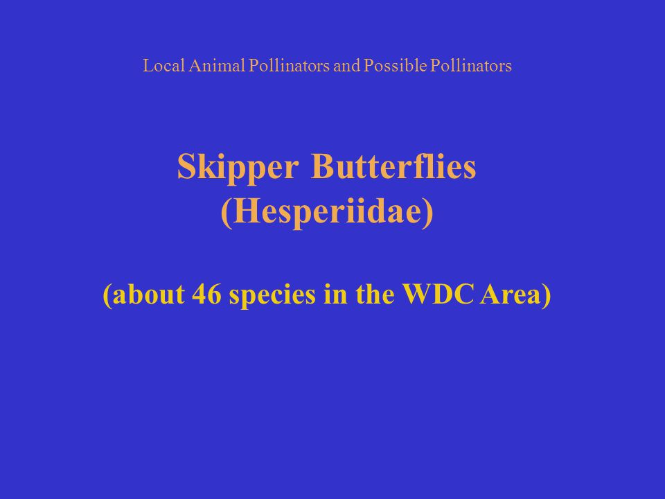 Local Animal Pollinators and Possible Pollinators Skipper Butterflies (Hesperiidae) (about 46 species in the WDC Area)