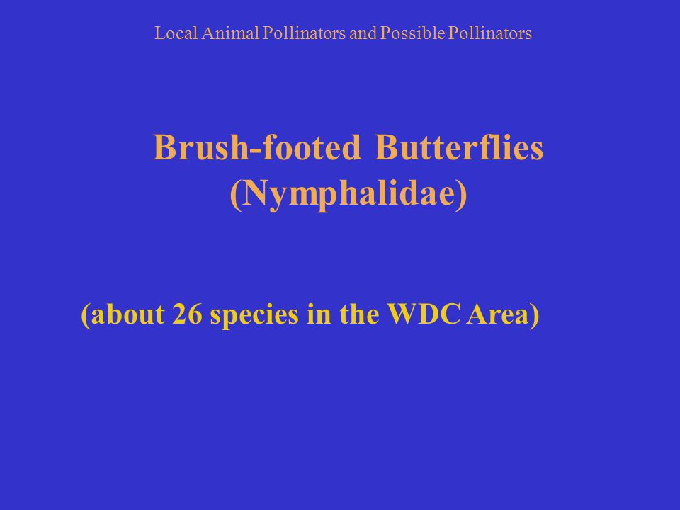 Brush-footed Butterflies (Nymphalidae) (about 26 species in the WDC Area) Local Animal Pollinators and Possible Pollinators