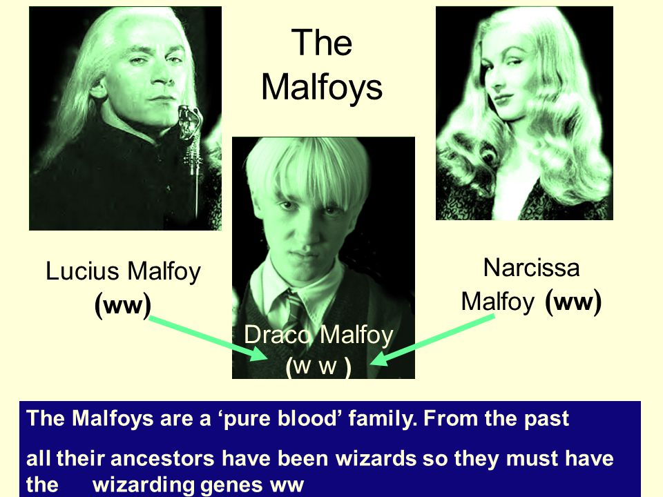 The Malfoys Lucius Malfoy ( ww ) Narcissa Malfoy ( ww ) Draco Malfoy ( ) The Malfoys are a 'pure blood' family.