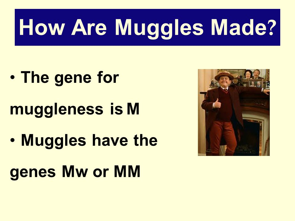 How Are Muggles Made The gene for muggleness is M Muggles have the genes Mw or MM