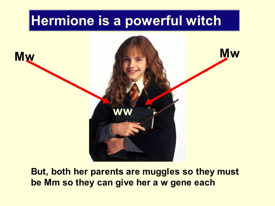 Hermione is a powerful witch so she But, both her parents are muggles so they must be Mm so they can give her a w gene each Mw ww