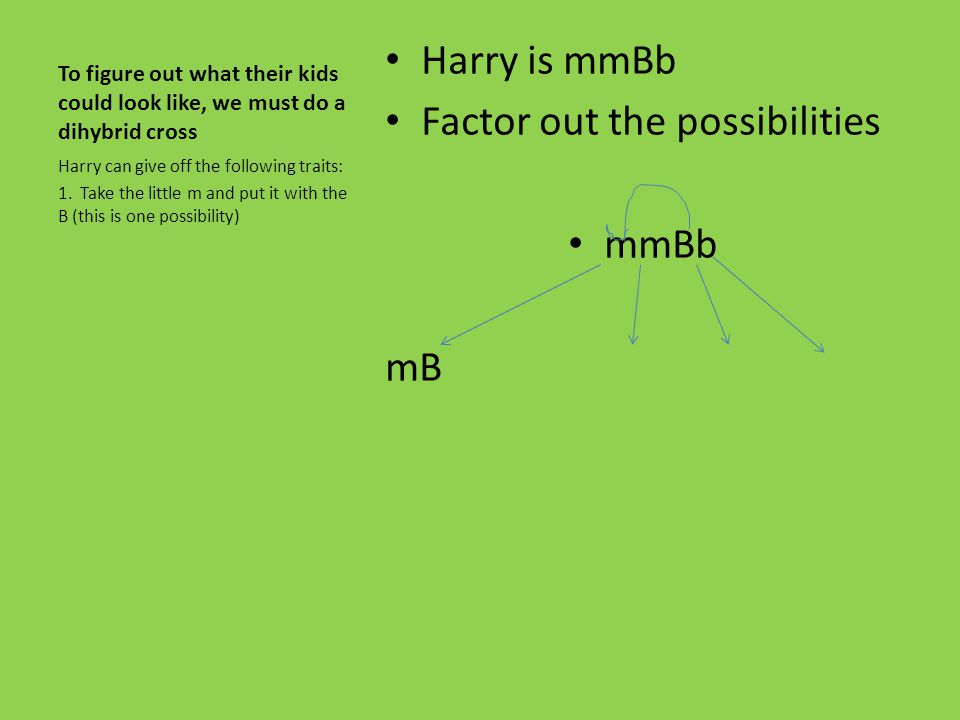 We have already determined the phenotypes for Harry and Ginny Harry is mm for magic and Bb for brown hair… or mmBb Ginny is mm for magic and bb for re