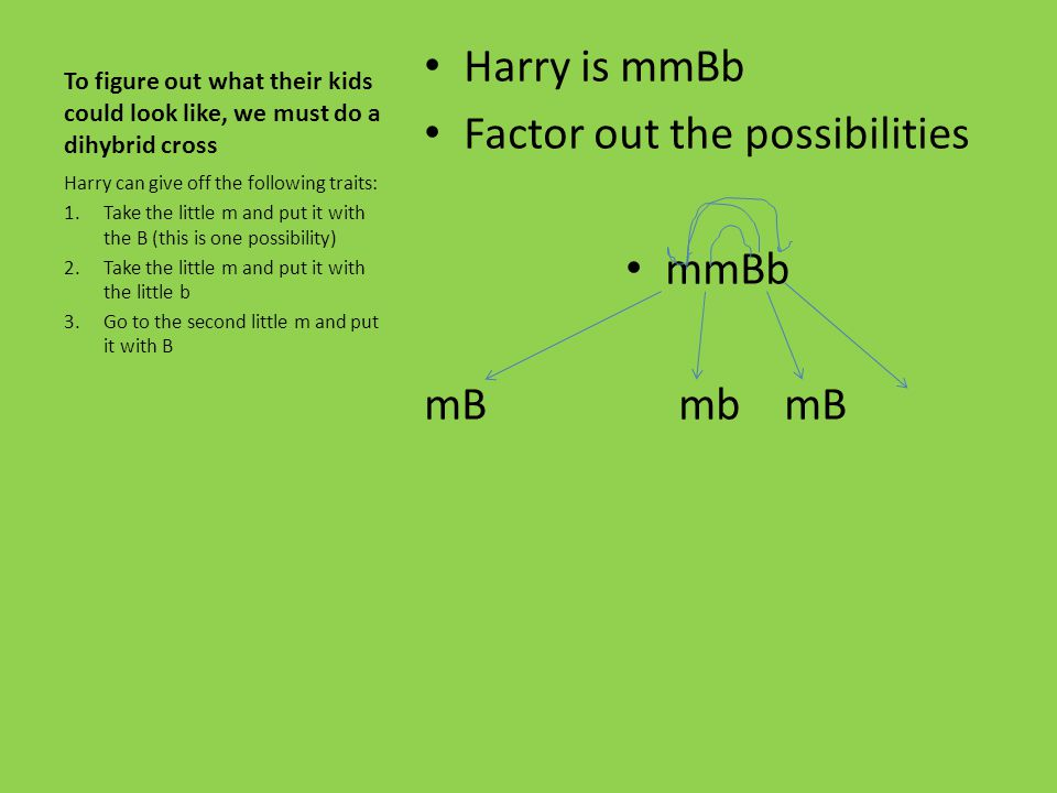 To figure out what their kids could look like, we must do a dihybrid cross Harry is mmBb Factor out the possibilities mmBb mB mb Harry can give off th