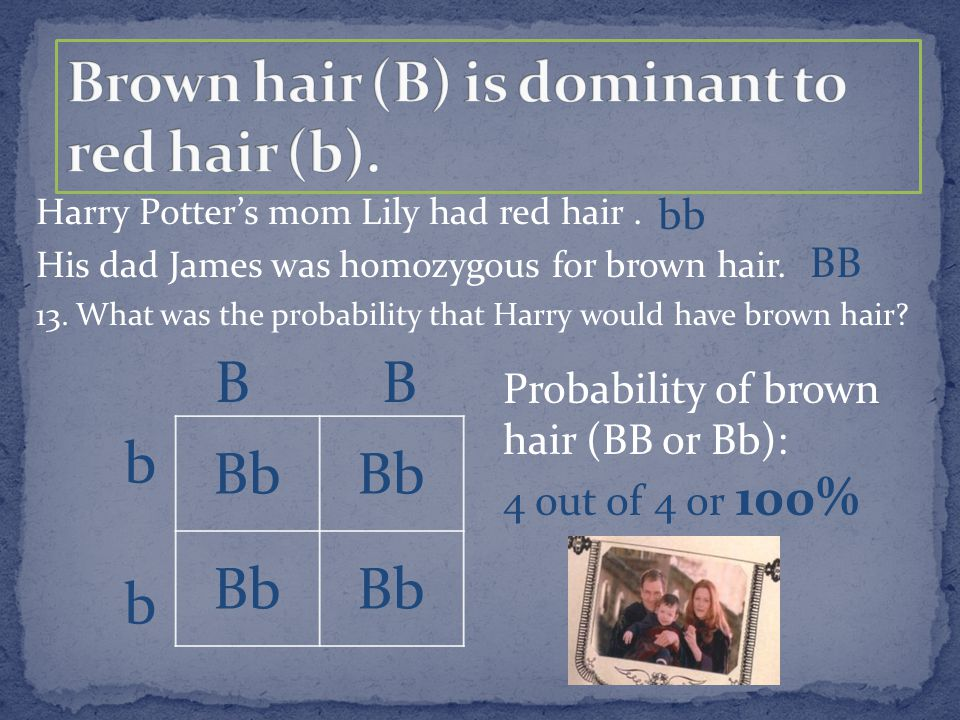 Harry Potter's mom Lily had red hair. His dad James was homozygous for brown hair. 13. What was the probability that Harry would have brown hair? bb B