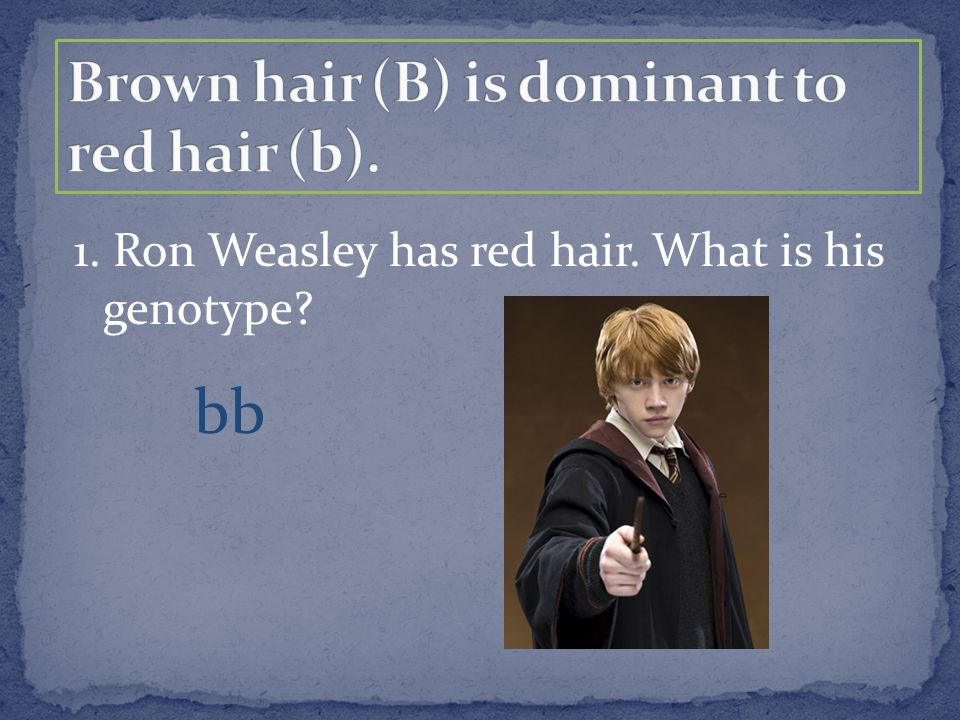1. Ron Weasley has red hair. What is his genotype? bb