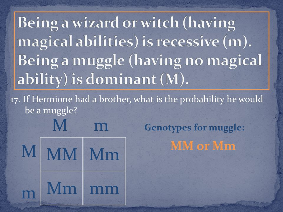 17. If Hermione had a brother, what is the probability he would be a muggle? MMMm mm MmMm M m Genotypes for muggle: MM or Mm