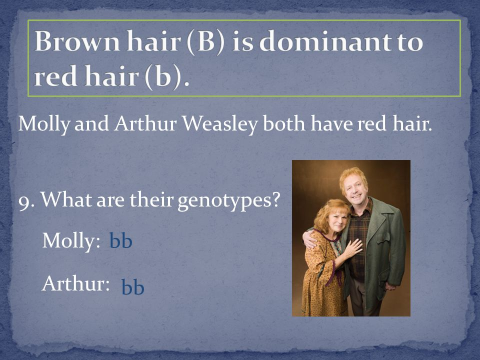 Molly and Arthur Weasley both have red hair. 9. What are their genotypes? Molly: Arthur: bb