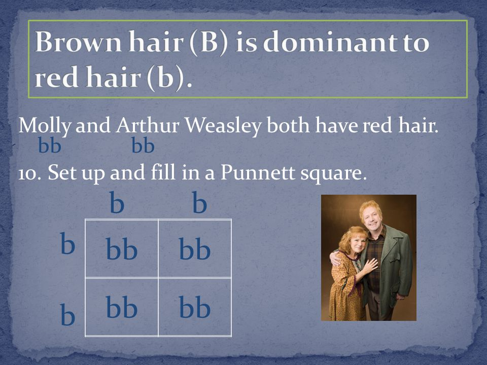 Molly and Arthur Weasley both have red hair. 10. Set up and fill in a Punnett square. bb b
