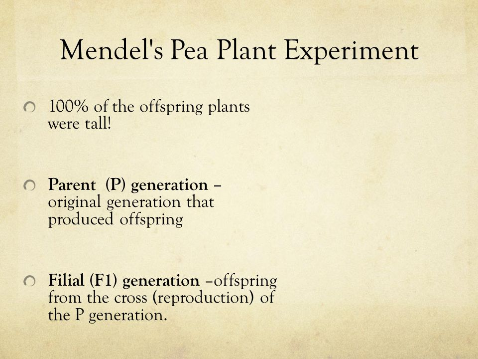 Mendel's Pea Plant Experiment 100% of the offspring plants were tall! Parent (P) generation – original generation that produced offspring Filial (F1)