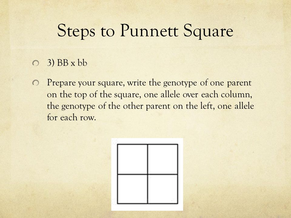 Steps to Punnett Square 3) BB x bb Prepare your square, write the genotype of one parent on the top of the square, one allele over each column, the ge