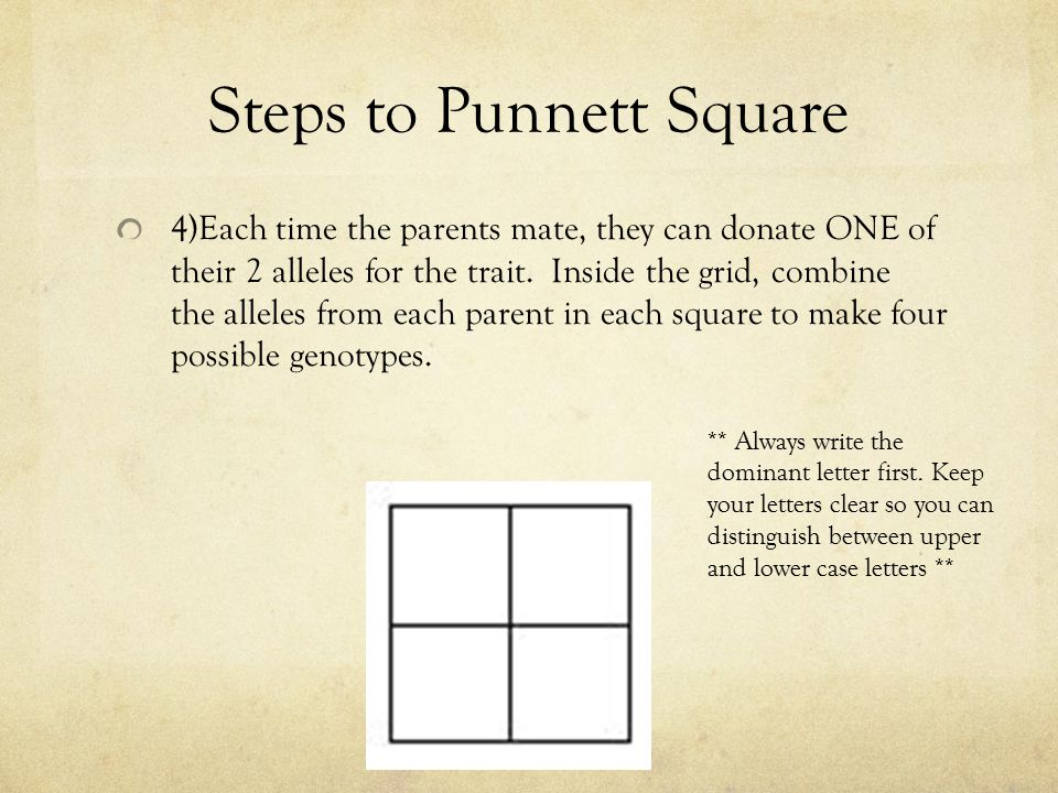 Steps to Punnett Square 4)Each time the parents mate, they can donate ONE of their 2 alleles for the trait. Inside the grid, combine the alleles from