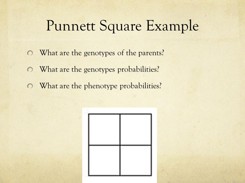 Punnett Square Example What are the genotypes of the parents.