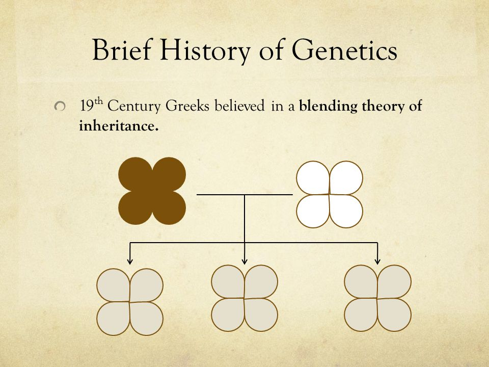 Brief History of Genetics 19 th Century Greeks believed in a blending theory of inheritance.