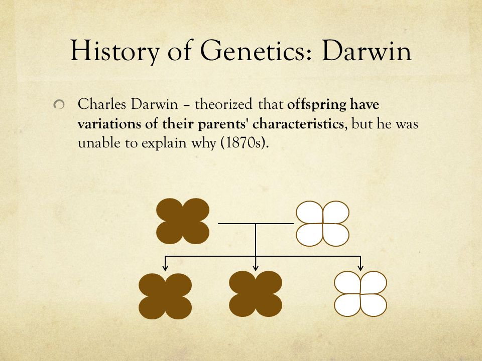 History of Genetics: Darwin Charles Darwin – theorized that offspring have variations of their parents characteristics, but he was unable to explain why (1870s).