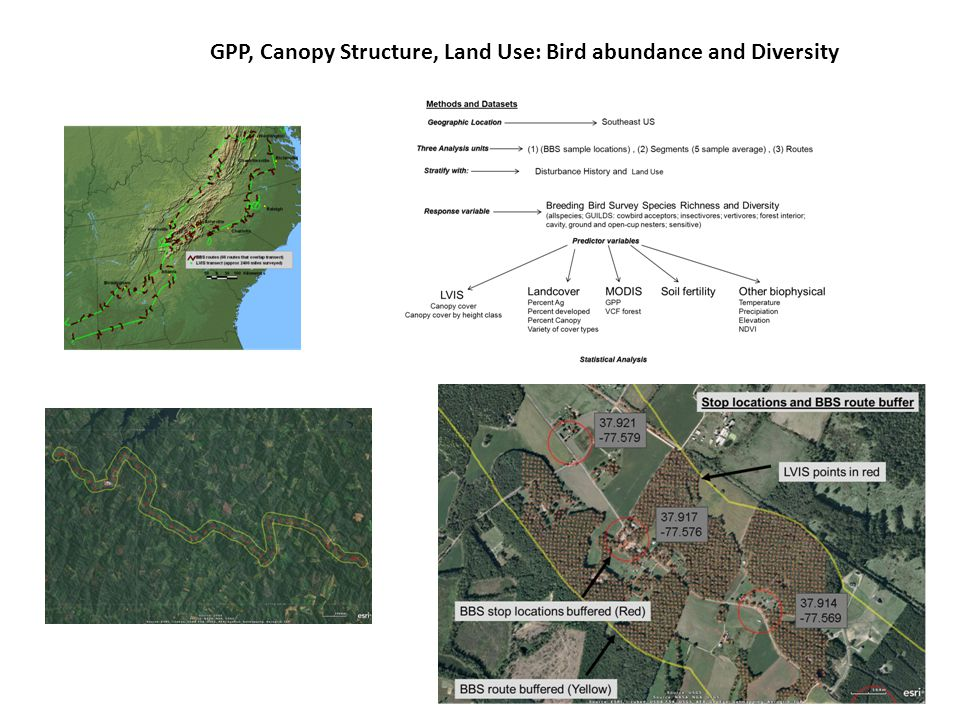 GPP, Canopy Structure, Land Use: Bird abundance and Diversity