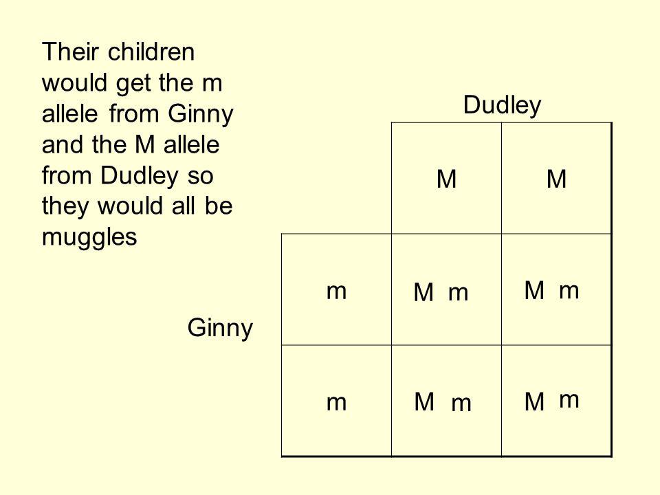 Dudley MM Ginny mWWM mW Their children would get the m allele from Ginny and the M allele from Dudley so they would all be muggles M m M m M m M m