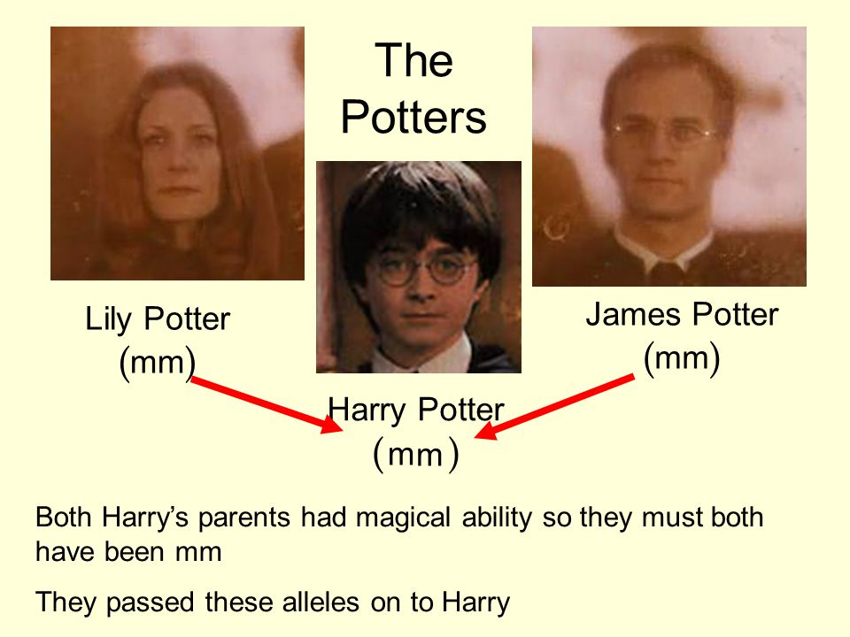 Lily Potter ( mm ) James Potter ( mm ) Harry Potter ( WW ) Both Harry's parents had magical ability so they must both have been mm They passed these alleles on to Harry The Potters m m