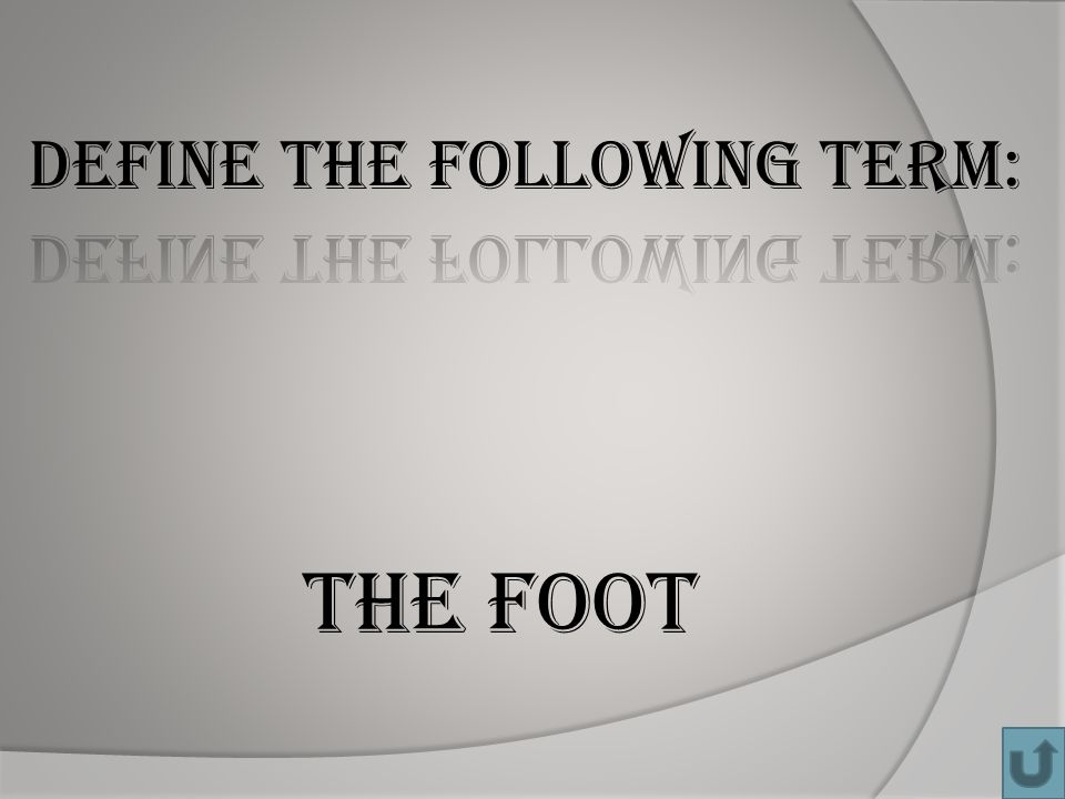 The Foot