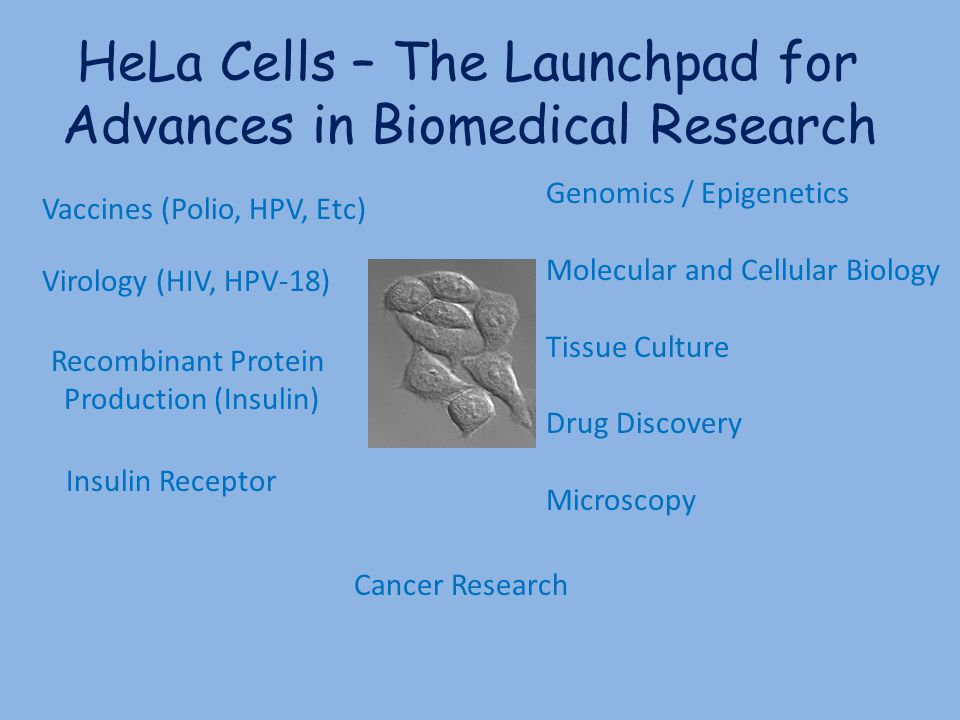 HeLa Cells – The Launchpad for Advances in Biomedical Research Vaccines (Polio, HPV, Etc) Virology (HIV, HPV-18) Recombinant Protein Production (Insul