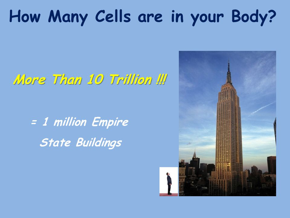 How Many Cells are in your Body? More Than 10 Trillion !!! = 1 million Empire State Buildings