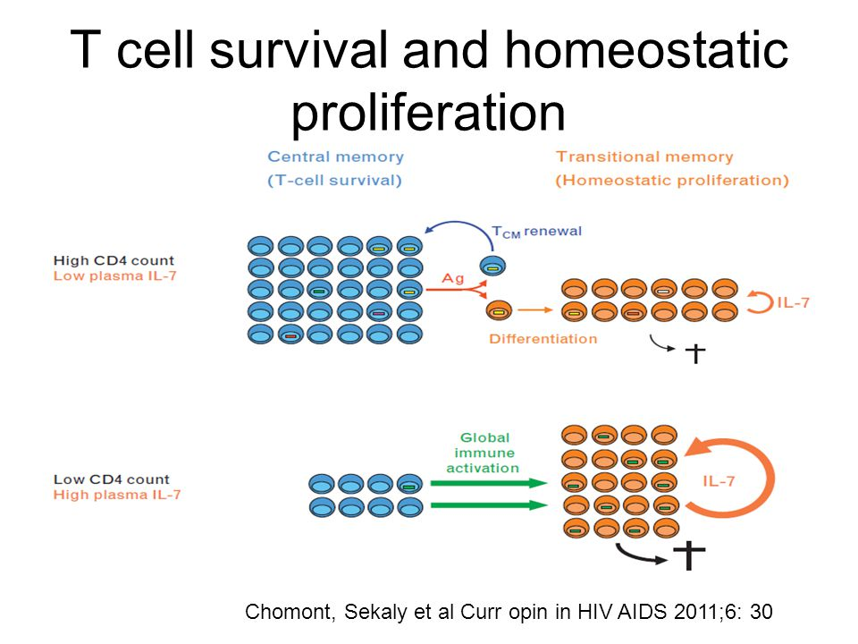 T cell survival and homeostatic proliferation Chomont, Sekaly et al Curr opin in HIV AIDS 2011;6: 30