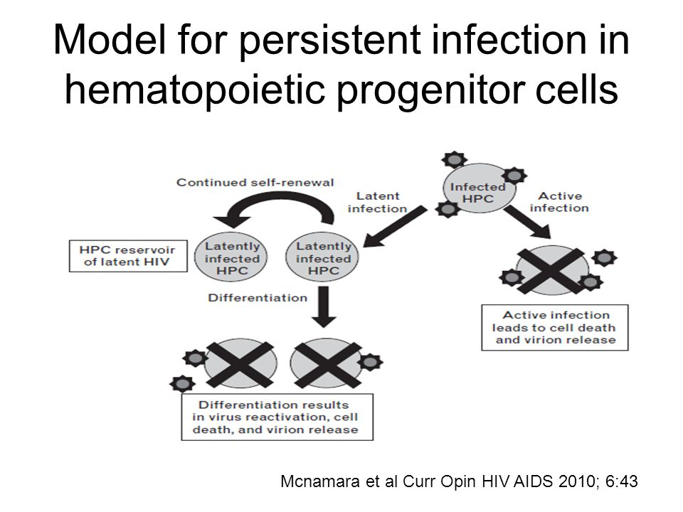 Model for persistent infection in hematopoietic progenitor cells Mcnamara et al Curr Opin HIV AIDS 2010; 6:43