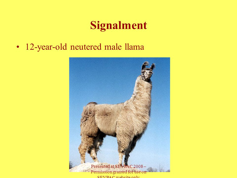 12-year-old neutered male llama Signalment Presented at SEVPAC 2008 – Permission granted for use on SEVPAC website only