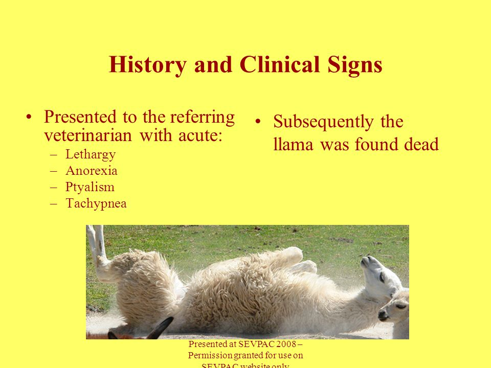 History and Clinical Signs Subsequently the llama was found dead Presented to the referring veterinarian with acute: –Lethargy –Anorexia –Ptyalism –Tachypnea Presented at SEVPAC 2008 – Permission granted for use on SEVPAC website only