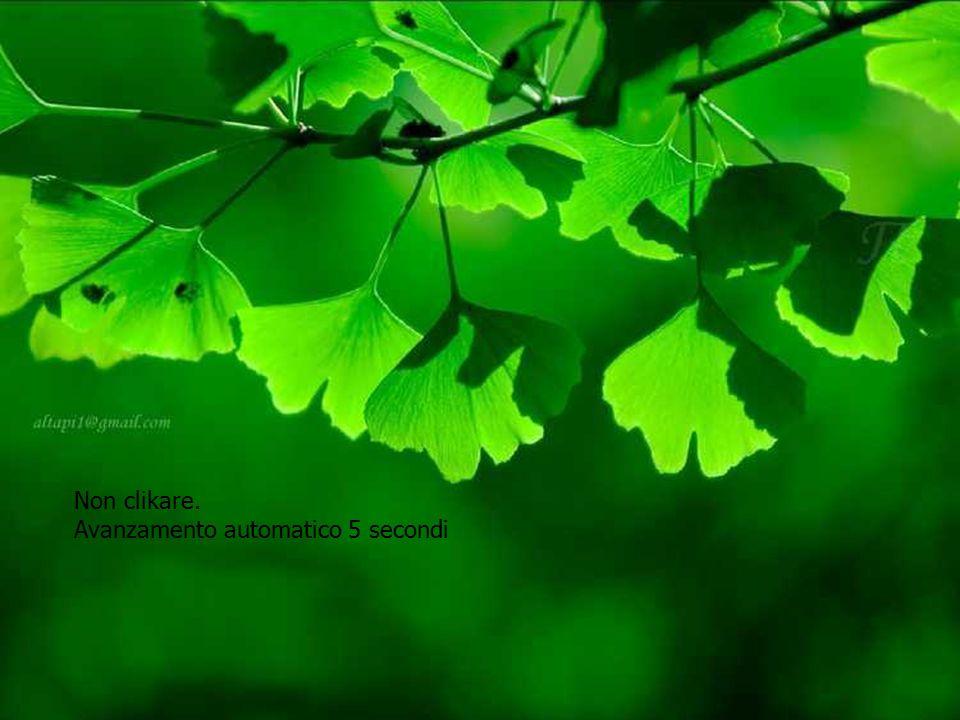 Π Green