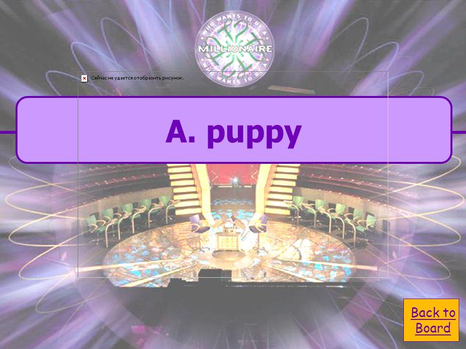  A. puppy A. puppy  C. lizord C. lizord  B.