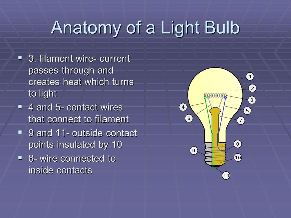 Anatomy of a Light Bulb  1.Glass bulb- protector  2.
