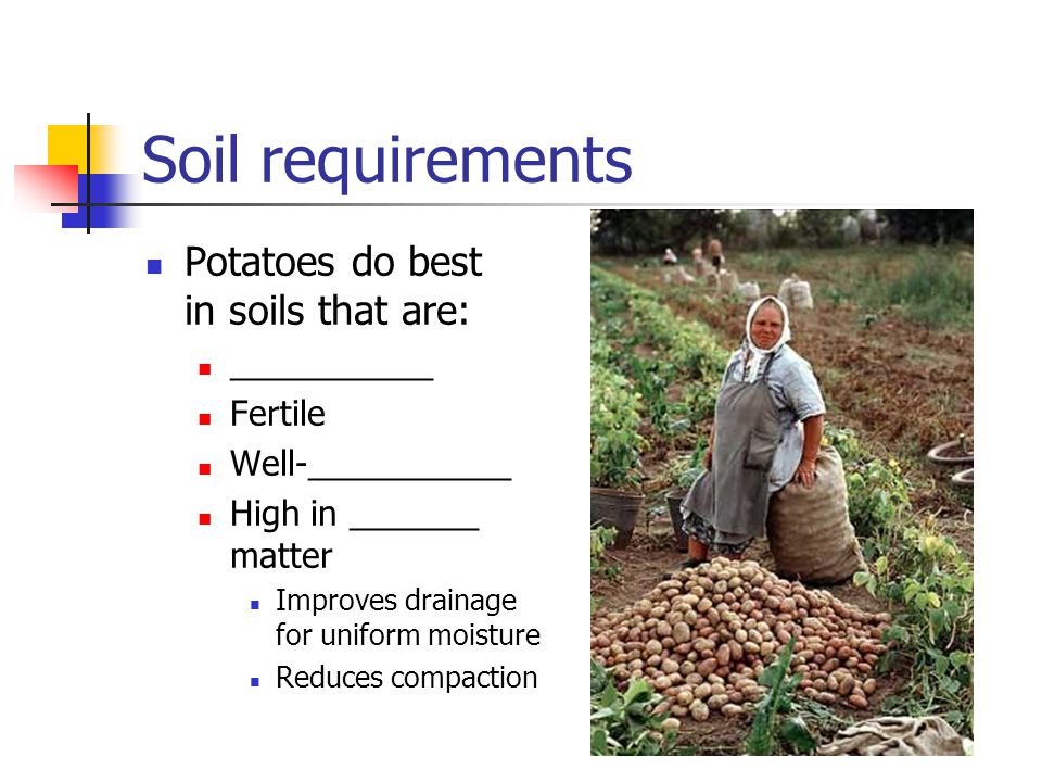 Soil requirements Potatoes do best in soils that are: ___________ Fertile Well-___________ High in _______ matter Improves drainage for uniform moistu