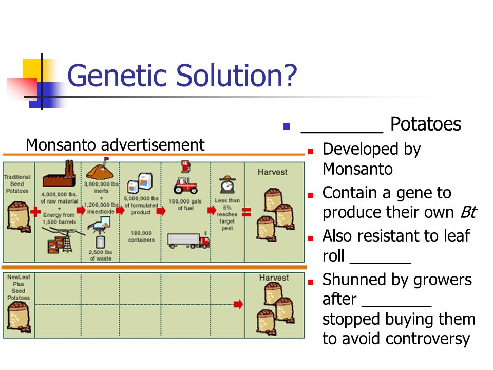 Genetic Solution? ________ Potatoes Developed by Monsanto Contain a gene to produce their own Bt Also resistant to leaf roll _______ Shunned by grower