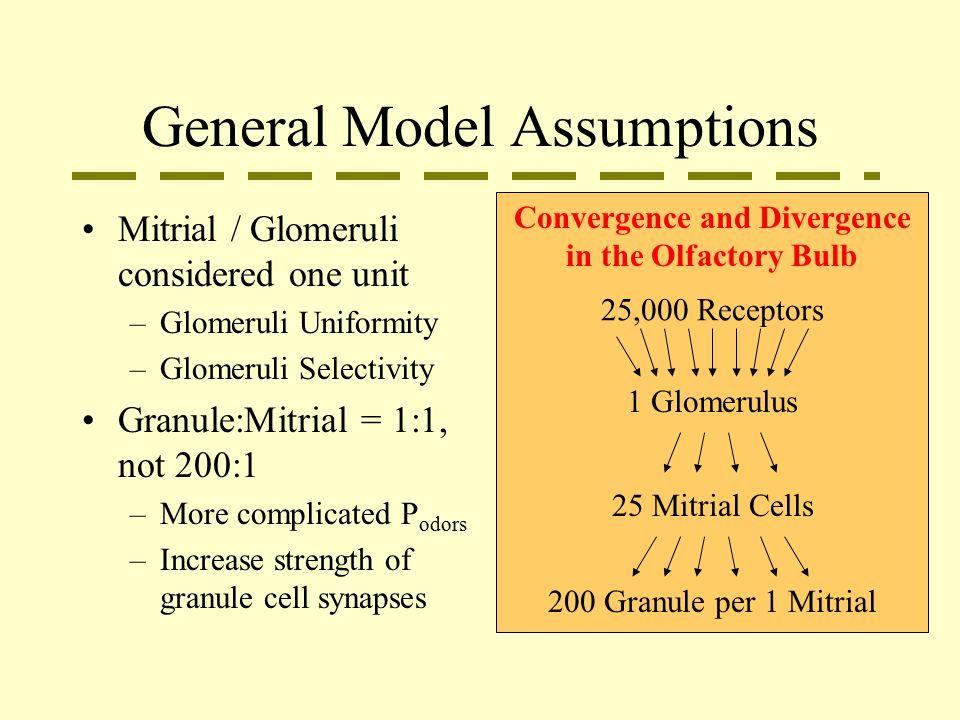 General Model Assumptions Mitrial / Glomeruli considered one unit –Glomeruli Uniformity –Glomeruli Selectivity Granule:Mitrial = 1:1, not 200:1 –More