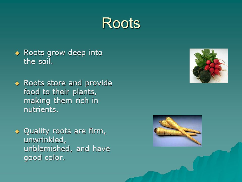 Roots  Roots grow deep into the soil.  Roots store and provide food to their plants, making them rich in nutrients.  Quality roots are firm, unwrin