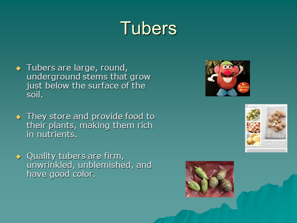 Tubers  Tubers are large, round, underground stems that grow just below the surface of the soil.  They store and provide food to their plants, makin