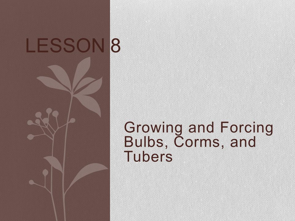 Growing and Forcing Bulbs, Corms, and Tubers LESSON 8