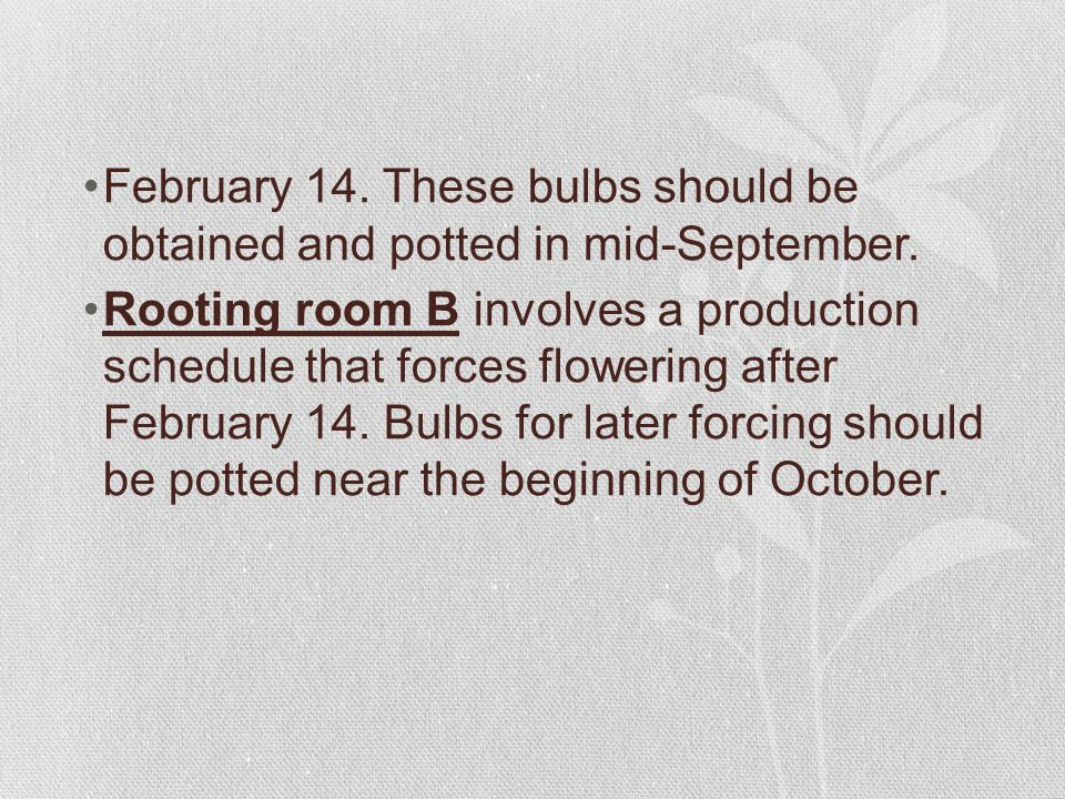 February 14.These bulbs should be obtained and potted in mid-September.