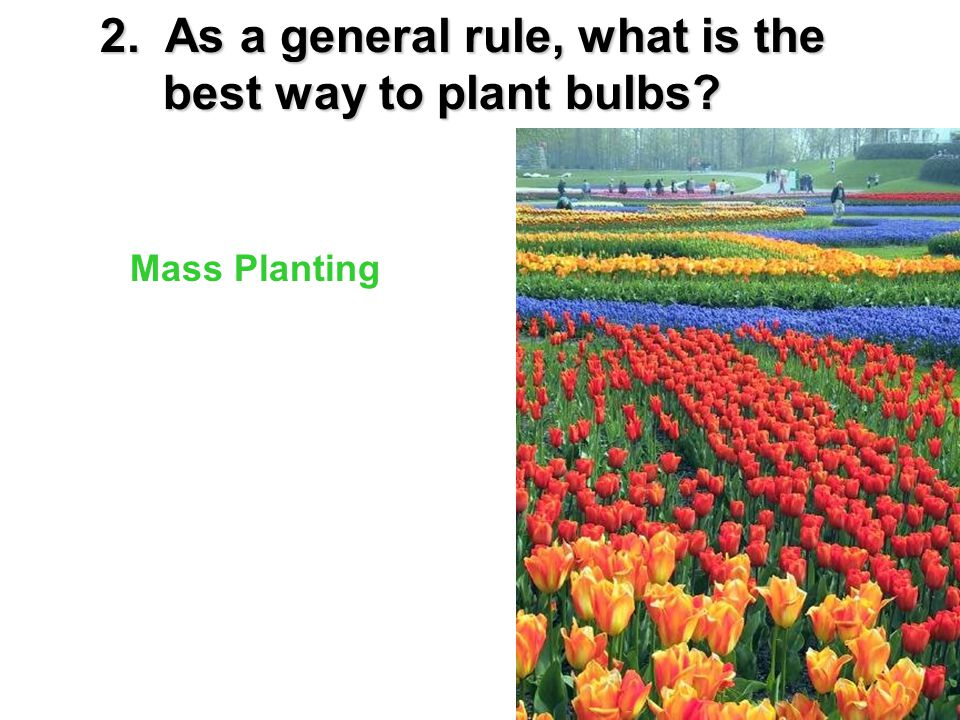 3. You should avoid planting bulbs in ___________ __________ _________. thinnarrowrows
