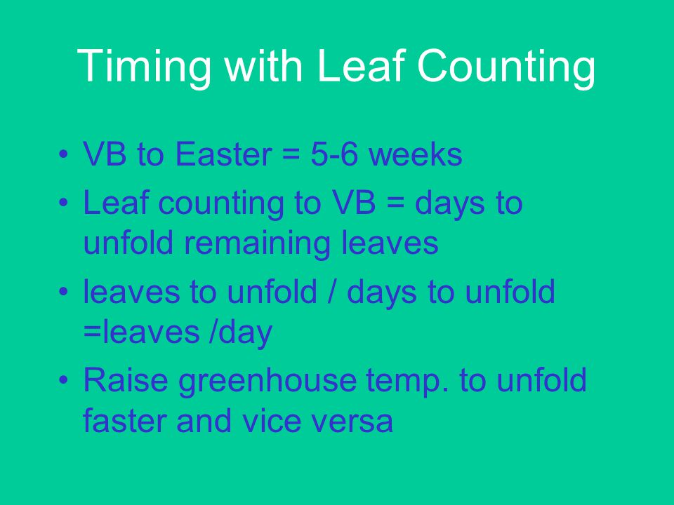 Timing with Leaf Counting VB to Easter = 5-6 weeks Leaf counting to VB = days to unfold remaining leaves leaves to unfold / days to unfold =leaves /day Raise greenhouse temp.