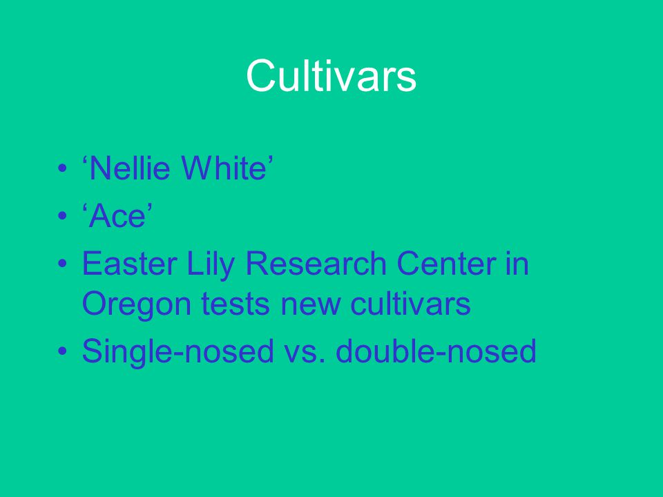 Cultivars 'Nellie White' 'Ace' Easter Lily Research Center in Oregon tests new cultivars Single-nosed vs.
