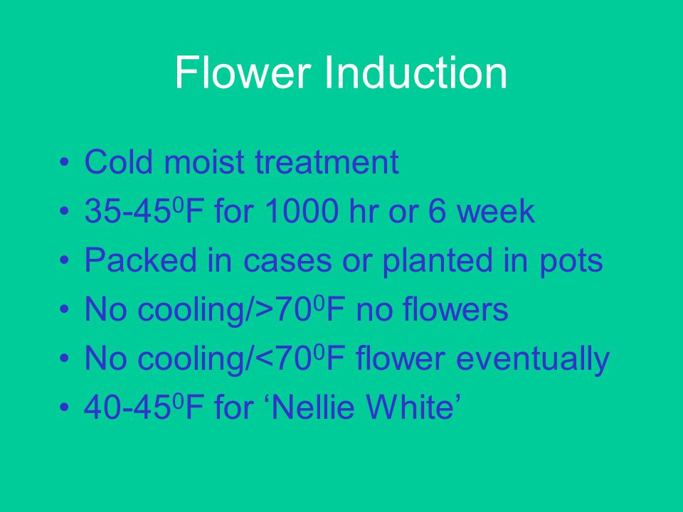 Postharvest Plants can be stored at 32 0 F for 14 days EthylBloc (1-MCP) extends the life of flowers Wholesale when puffy white Retail when one flower is open