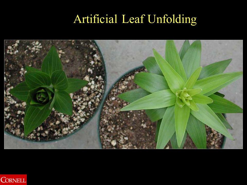 Artificial Leaf Unfolding