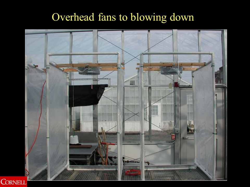 Overhead fans to blowing down