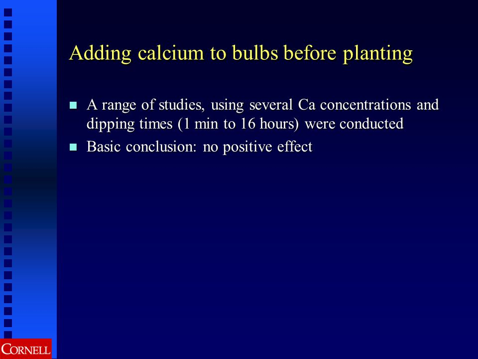 Adding calcium to bulbs before planting A range of studies, using several Ca concentrations and dipping times (1 min to 16 hours) were conducted A ran