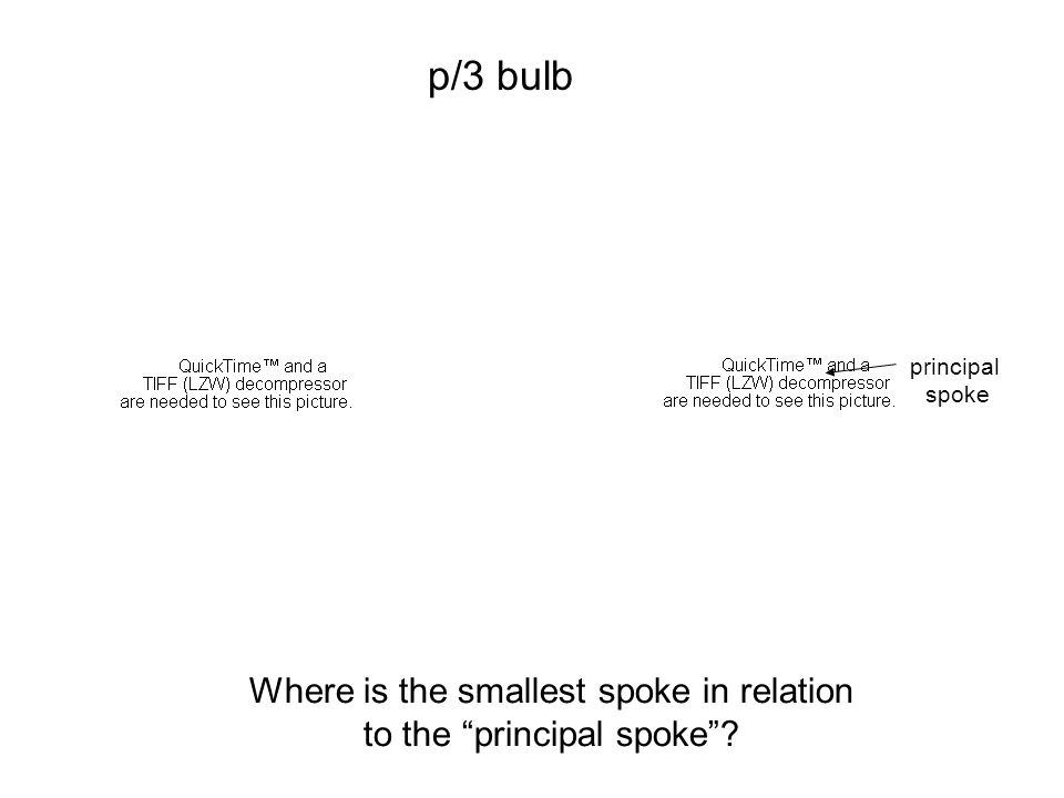Where is the smallest spoke in relation to the principal spoke p/3 bulb principal spoke